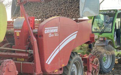 Unsere Frühkartoffeln kommen heute in den Boden